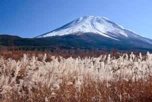 富士山腹より望むススキと富士山の写真素材 [FYI02676877]