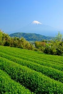 静岡県 富士市の茶畑と富士山の写真素材 [FYI02676879]