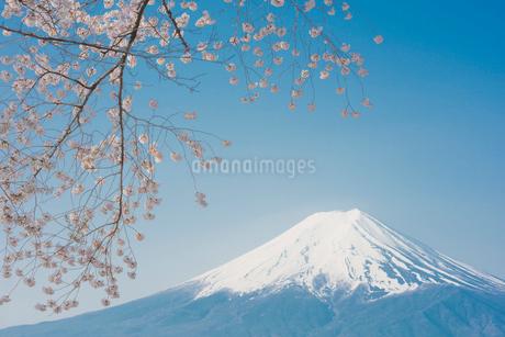 新倉山浅間公園 桜と富士山の写真素材 [FYI02676909]