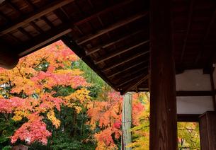 常照寺の紅葉の写真素材 [FYI02676920]