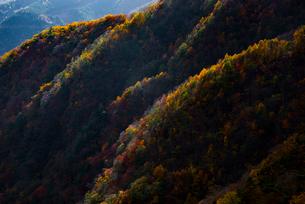 山の紅葉の写真素材 [FYI02676953]