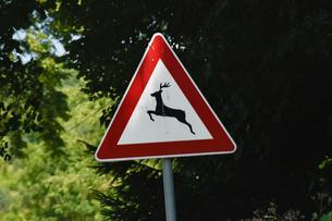 動物注意の標識の写真素材 [FYI02676966]