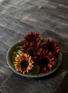 ブリキの花器にアレンジされたシックな色味のヒマワリの写真素材 [FYI02676984]