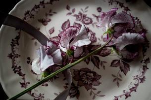 アンティークのお皿とスイートピーの写真素材 [FYI02677021]