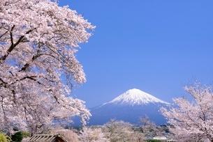 興徳寺の桜と富士山の写真素材 [FYI02677049]
