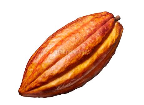 カカオ豆 トリニタリオ種の写真素材 [FYI02677109]