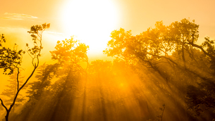 光のシャワーの写真素材 [FYI02677137]