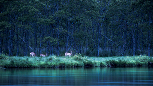 釧路湿原の写真素材 [FYI02677161]