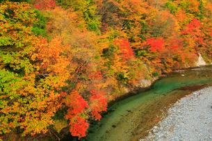 白神山地・太良峡の紅葉の写真素材 [FYI02677236]