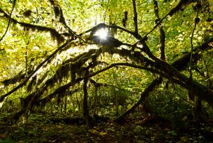 シルバーフォールズ州立公園内の逆光と森の写真素材 [FYI02677244]
