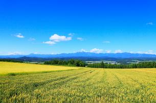 麓郷の森展望台から望む麦畑・富良野市街・夕張山地の写真素材 [FYI02677250]