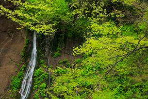 布引の滝と新緑の写真素材 [FYI02677251]