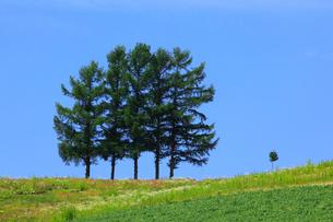 嵐の木の写真素材 [FYI02677321]