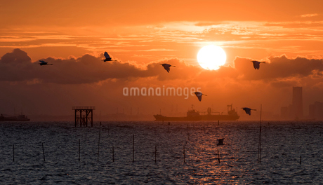江川海岸 海中電柱の写真素材 [FYI02677338]