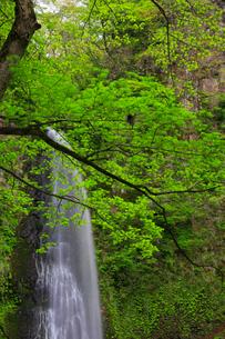 雨滝と新緑の写真素材 [FYI02677369]
