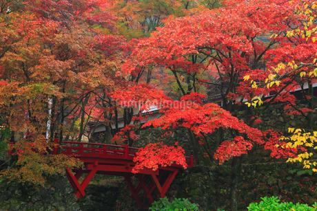 両界山横蔵寺の紅葉の写真素材 [FYI02677469]