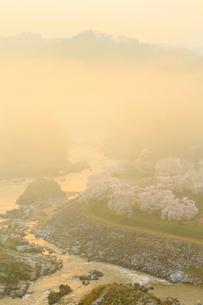 島山公園のサクラ 朝日に染まる雲海の写真素材 [FYI02677486]