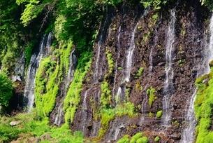 静岡県 白糸の滝 溶岩断層からの湧水の写真素材 [FYI02677504]