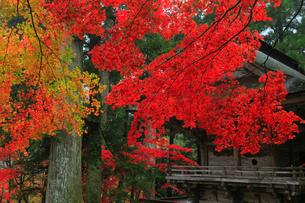 両界山横蔵寺の紅葉の写真素材 [FYI02677535]