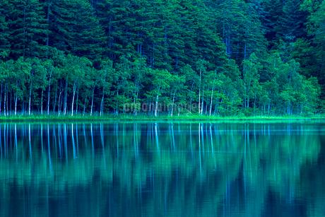 木々の水面への映り込みの写真素材 [FYI02677551]