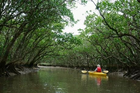 奄美大島 マングローブ原生林とカヌーの写真素材 [FYI02677569]