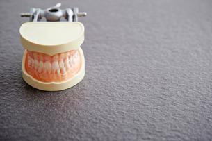 歯の模型の写真素材 [FYI02677583]