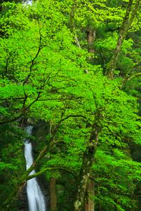 龍王の滝の写真素材 [FYI02677606]
