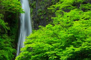 井倉峡 絹掛の滝と 新緑の写真素材 [FYI02677640]