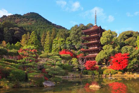 瑠璃光寺の紅葉の写真素材 [FYI02677670]