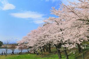高松公園のサクラと岩手山の写真素材 [FYI02677694]