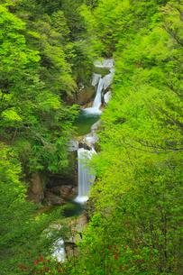 神蛇滝と新緑の写真素材 [FYI02677764]