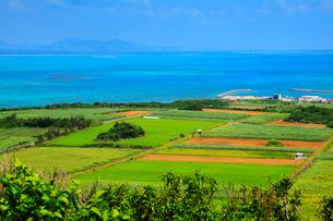 沖縄・小浜島 大岳(うふだき)展望台から望む海の写真素材 [FYI02677776]