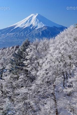 三ツ峠山より望む霧氷と富士山の写真素材 [FYI02677807]
