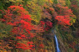 子安峡の紅葉と不動滝の写真素材 [FYI02677829]