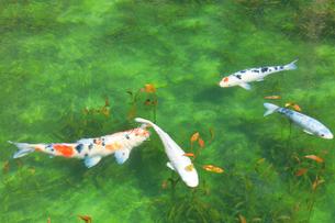 モネが描いた絵のような池の写真素材 [FYI02677861]