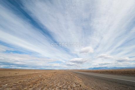 パタゴニアのコイロン草の大草原の写真素材 [FYI02677952]
