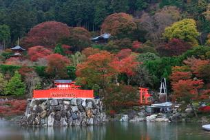 紅葉の勝尾寺の写真素材 [FYI02678007]