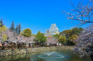 姫路城 城見橋より天守閣と桜に噴水の写真素材 [FYI02678009]