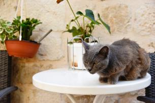 テーブルの上のネコの写真素材 [FYI02678093]