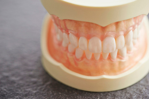 歯の模型の写真素材 [FYI02678098]