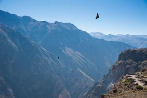 コルカキャニオンの展望台と飛翔するコンドルの写真素材 [FYI02678145]