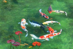 モネが描いた絵のような池の写真素材 [FYI02678180]
