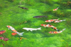モネが描いた絵のような池の写真素材 [FYI02678241]