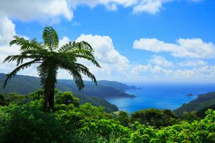 奄美大島 油井岳展望台より望む伊須湾と太平洋の写真素材 [FYI02678258]