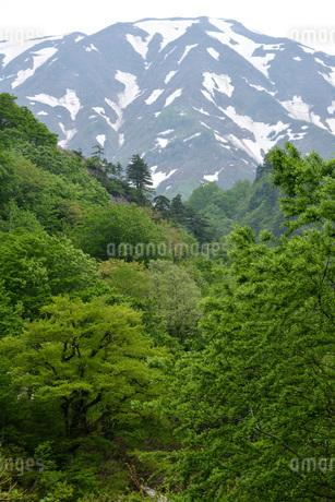 只見町 浅草岳 新緑の写真素材 [FYI02678374]