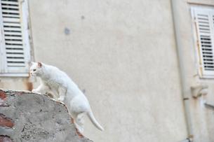屋根の上のネコの写真素材 [FYI02678444]