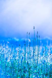 透明に輝く草花の写真素材 [FYI02678456]