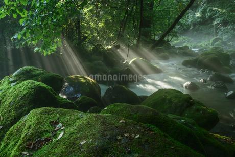 原生林と湧水と光芒の写真素材 [FYI02678540]