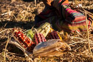 ペルー先住民ケチュア族の儀式 供物のトウモロコシの写真素材 [FYI02678548]