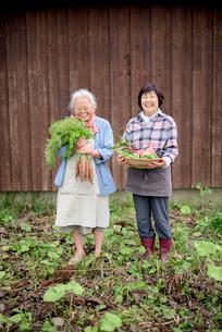 収穫した野菜を持つシニア女性の写真素材 [FYI02678623]